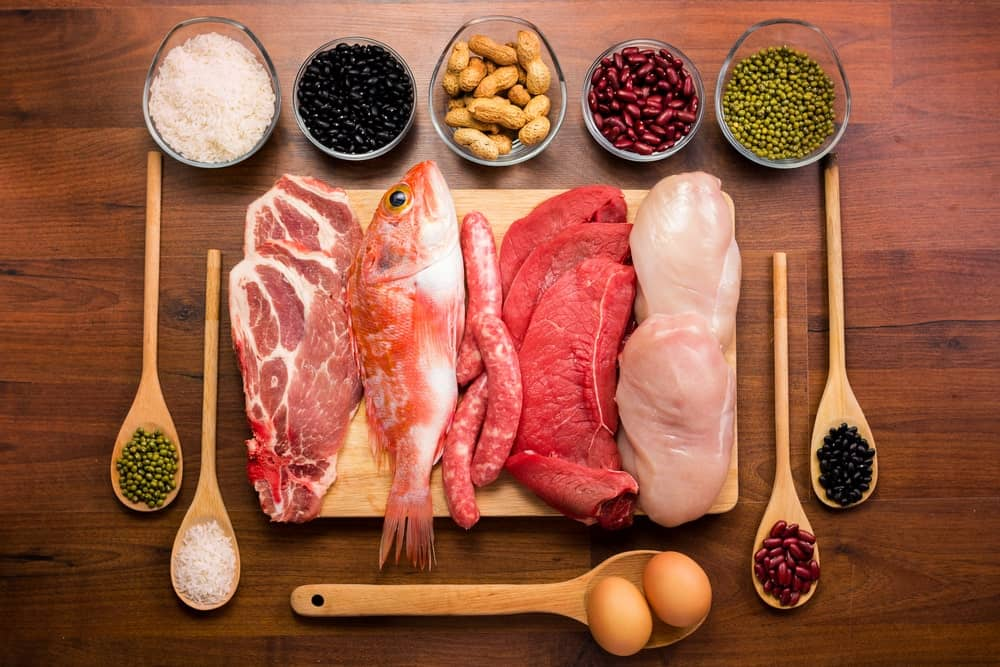 The different sources of protein.