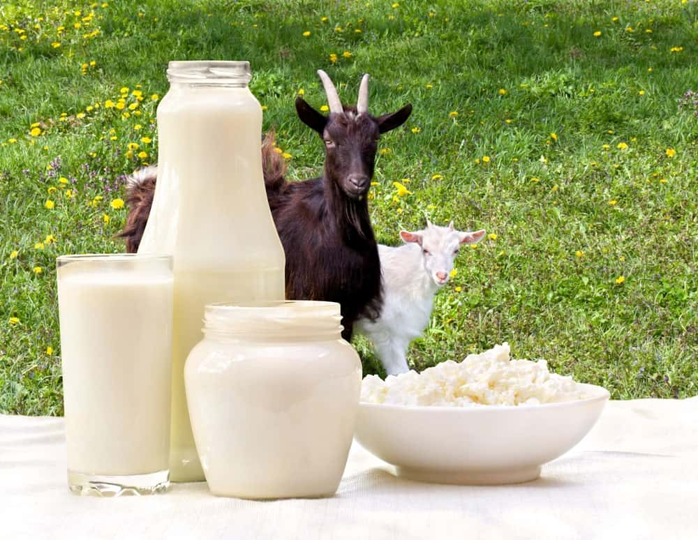 The various dairy products that come from goat milk.