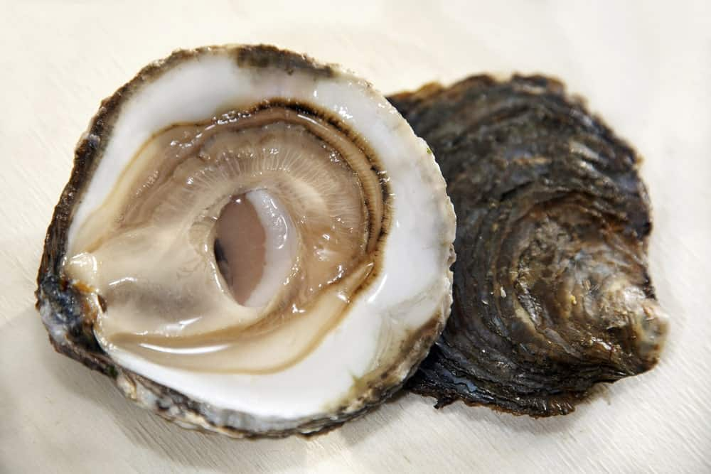 A close look at a couple of Belon oysters.