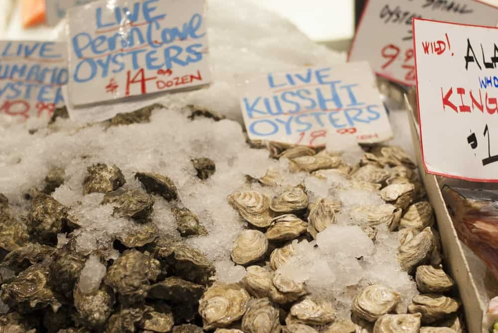 Live Kusshi oysters on display at a market.