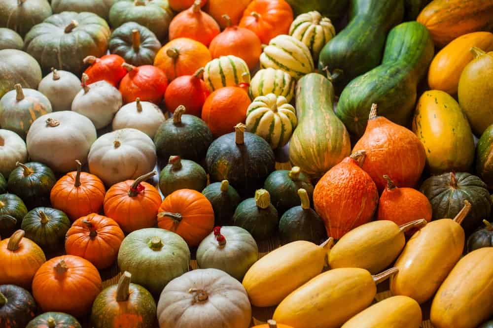 Bunches of various colorful squash.