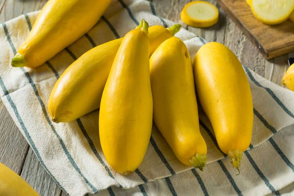 A look at the freshly harvested ripe straight neck squash.