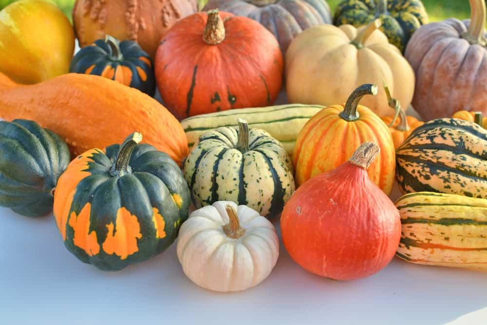 A collection of various winter squash.