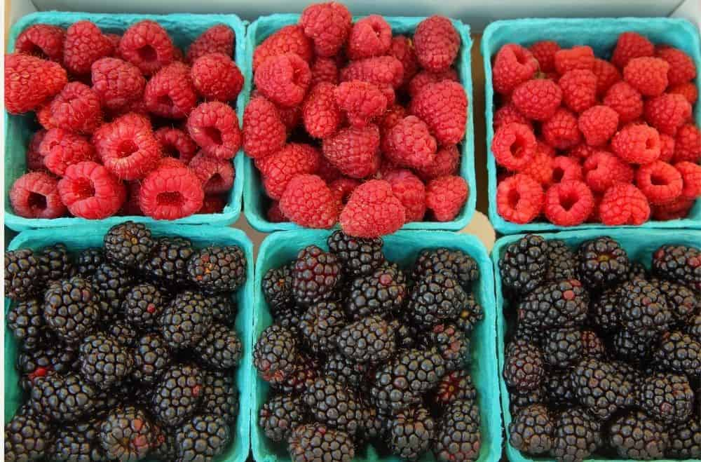 red and black raspberry